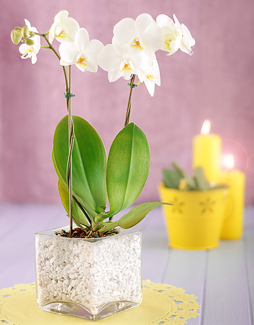 Mini White Orchid in Stone Filled Vase