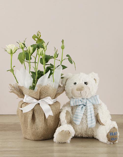 It's a Boy Teddy and White Rose Bush