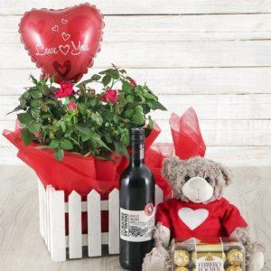 Rose Bush, Wine, Balloon, Teddy & Ferrero