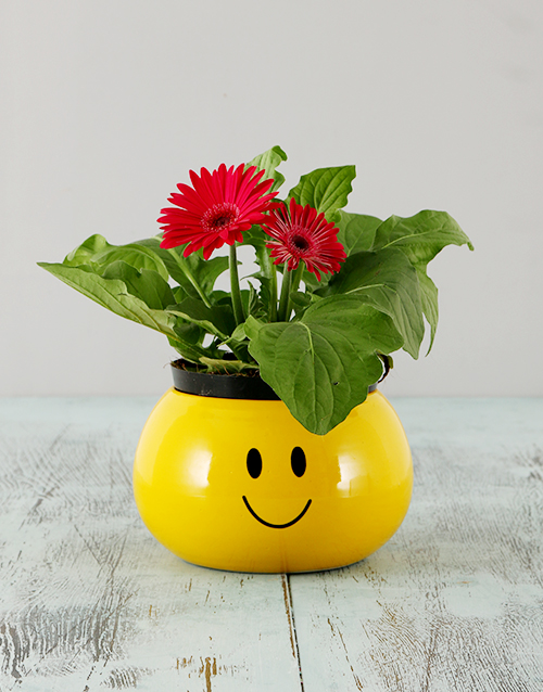 Mini Gerbera in a Smiley Pot