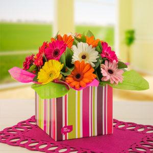 Mixed Mini Gerberas in a Stripe Gift Box