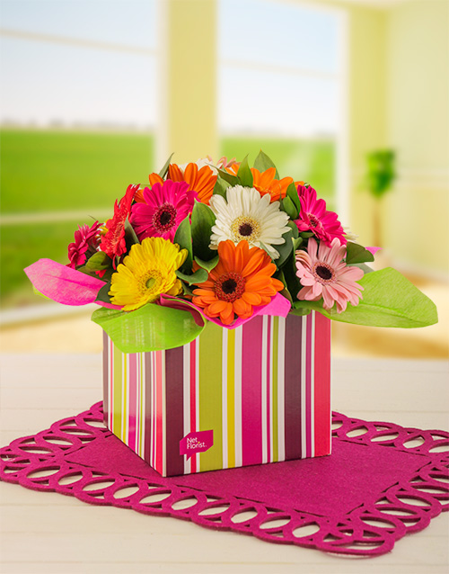 Mixed Mini Gerberas in a Stripe Gift Box