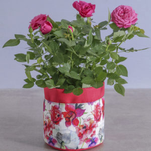 Cerise Rose Bush In Floral Planter