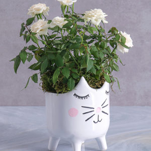 Rose Bush in Kitty Vase