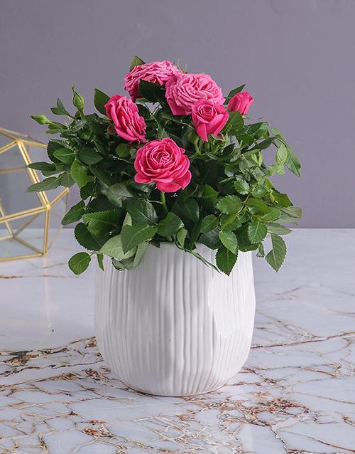 Rose Bush in White Ceramic