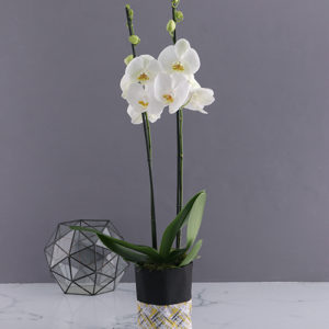 Two Stemmed Orchid In Oriental Bag