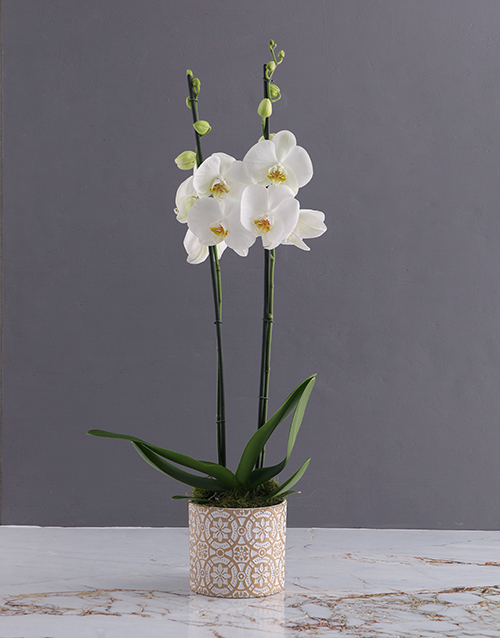 Two Stemmed White Orchid In White and Gold