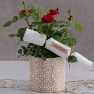 Red Rose Bush In Embossed Golden Planter