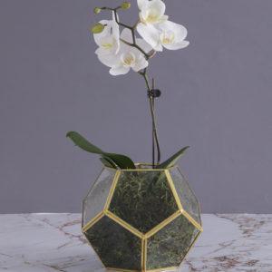 Midi Orchids In A Vase