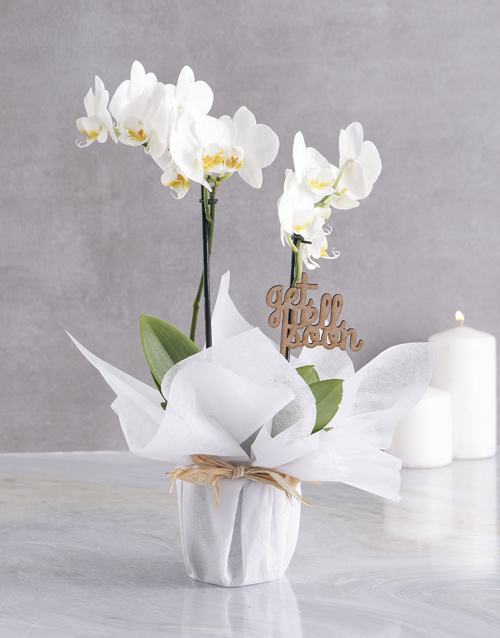 White Midi Orchid Of Wellness In Wrapping