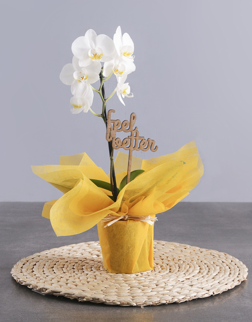 White Midi Feel Good Orchid In Wrapping
