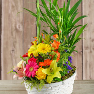 Plant with Flower Arrangement in a Basket For Mother's Day