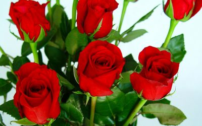 How To Preserver Roses: The Tricks Of The Experts