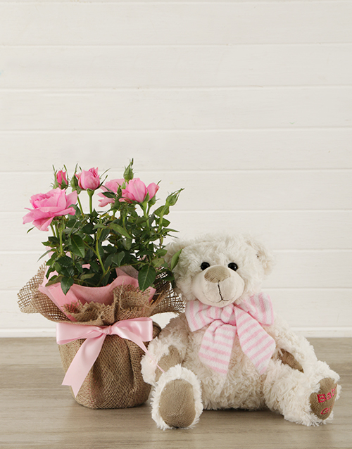 baby Its a Girl Teddy and Pink Rose Bush