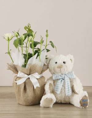 baby Its a Boy Teddy and White Rose Bush