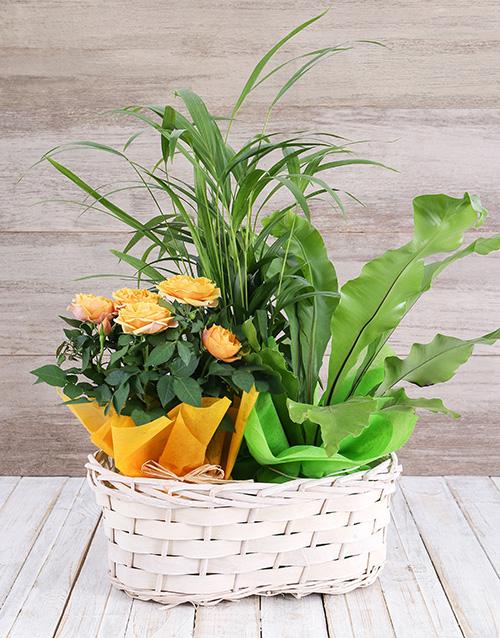 Rose Bush and Plant Basket