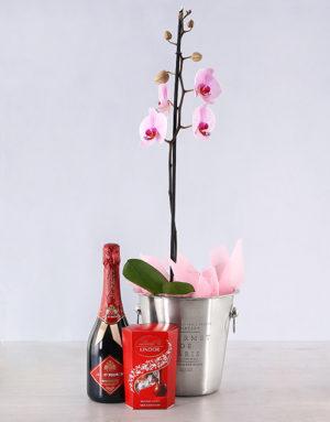 orchids Elegant Orchid Hamper Gift