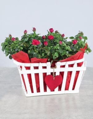 Box of Love Rose Gift Box