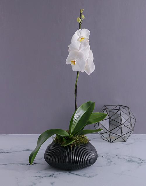 orchids Phalaenopsis Orchid in Gunmetal Vase