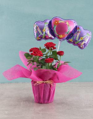 Rose Bush for Mom