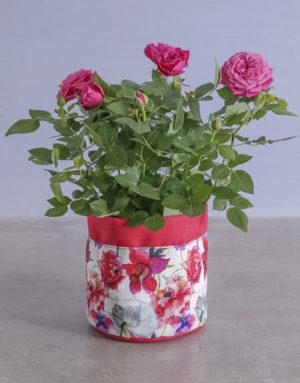 Cerise Rose Bush In Floral Planter