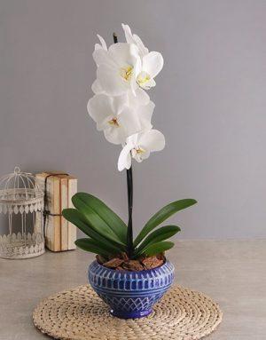 orchids Phalaenopsis in Blue Diamond Pot