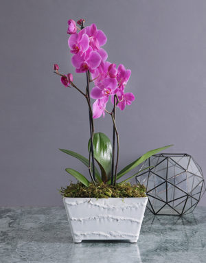 orchids Pink Orchid in Textured Ceramic Planter