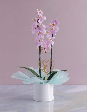 orchids Personalised Initialed Heart Orchid in a Hatbox