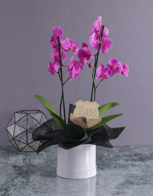 orchids Personalised Date Orchid in a Hatbox