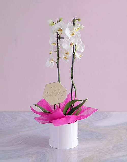 orchids Happy Birthday Orchid in a Hatbox