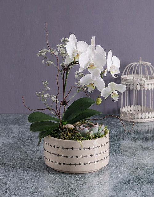 orchids Midi Orchid Garden In A Pot