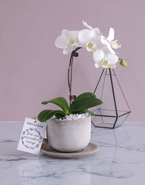 orchids Personalised Orchids In A Pot