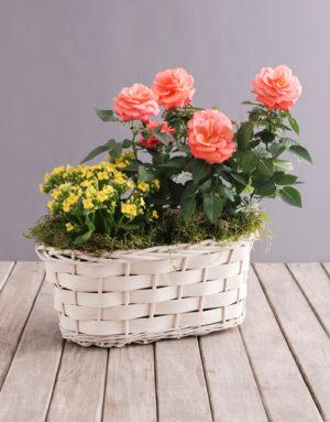 roses Orange Rose and Yellow Kalanchoe Basket