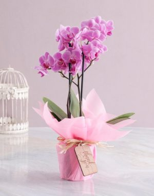 orchids Pink Midi Thank You Orchid