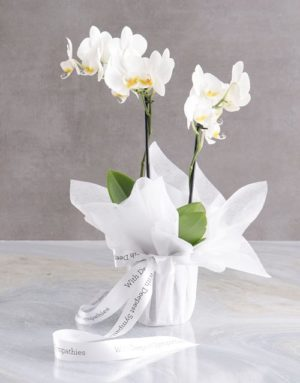 orchids White Midi Sympathy Orchid
