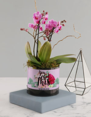 orchids You Got This Pink Midi Orchid