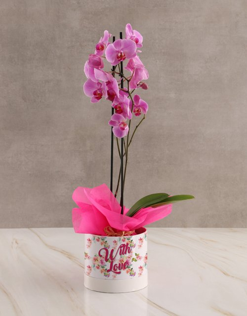 orchids With Love Pink Orchid