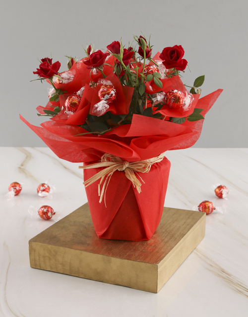 roses Red Rose Bush And Chocolates