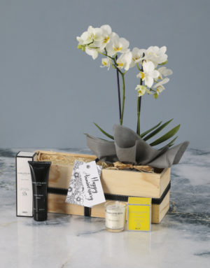 orchids Luxurious White Orchid Wonder