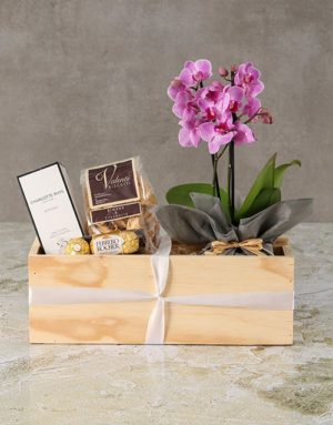 orchids Tranquil White Orchid With Chocolates
