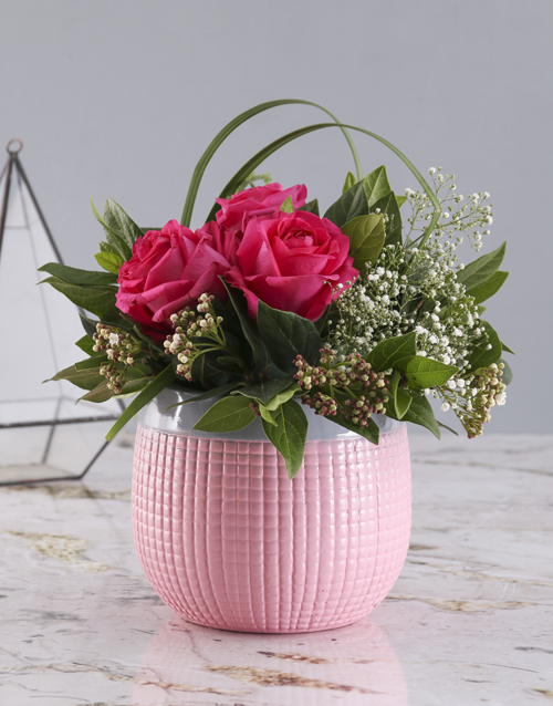 roses Cerise Roses In Pink Pot